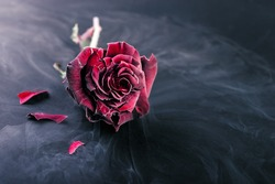Frozen red rose  in liquid nitrogen on black background