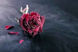 Frozen red rose  in liquid nitrogen on black background