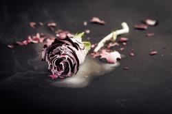 Frozen red rose on black background
