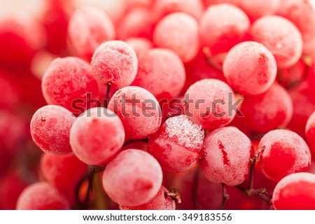 Frozen red viburnum berries. Macro image with small depth of field. Beautiful background.  #349183556