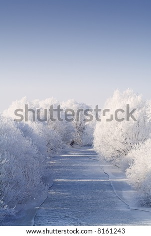 Frozen river flanked by white frost trees in the bright winter sun, after a chilling and foggy night