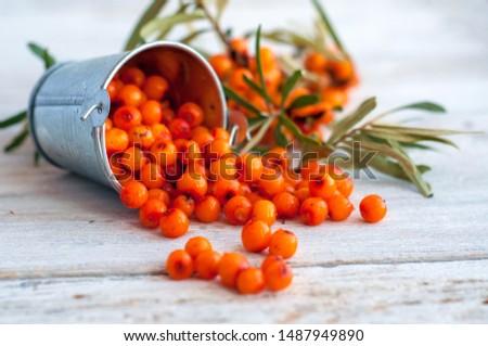 frozen sea buckthorn berries in a bucket #1487949890