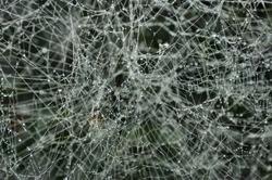 Frozen spider web background