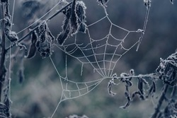 Frozen spider web background winter. Frozen nature. A cobweb on the grass in a woods covered by iced frost.