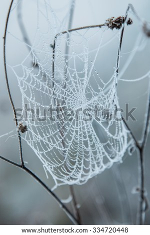 Frozen spider web covered with frost early in the morning #334720448