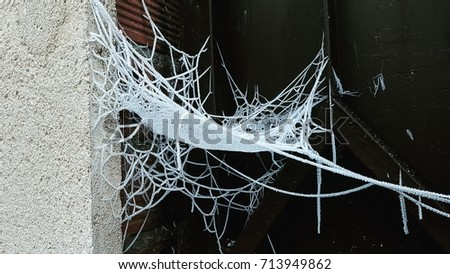 Frozen spider web near the wall.