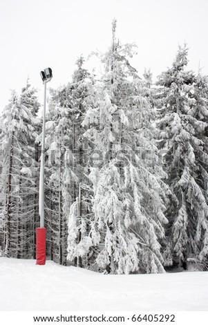 Frozen Spruce in Mountains