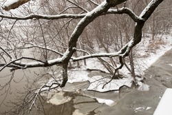 Frozen Susquehanna RIver banks in Harrisburg, PA on snowy winter day through snow covered tree branches.
