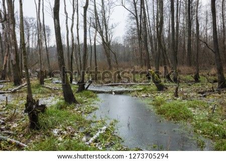 Frozen swampy forest with green grass and broken trees