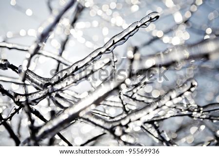 Frozen Tree Branch In Winter Stock Photo 95569936