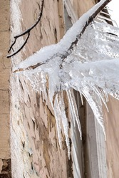 Frozen tree branch with icicles. Pieces of ice and icicles hanging from tree. Winter subfreezing weather concept.