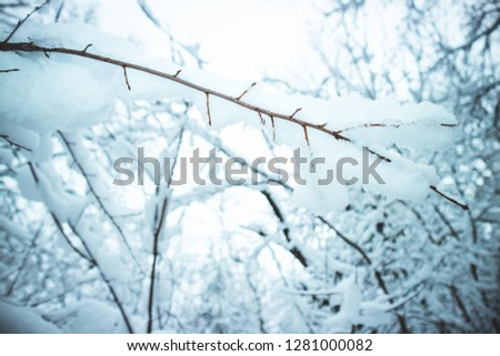 Frozen tree branch with snow and frost. Winter landscape in forest #1281000082