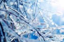 Frozen tree branches with blue icicles