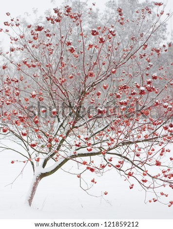 Frozen tree on winter field and white sky