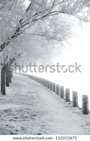 Frozen trees and rural road