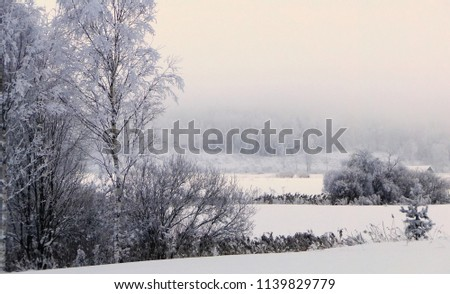 Frozen trees and snowy field in a winter day in Finland. Not much daylight in a middle of a day.  #1139829779