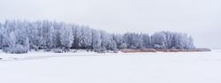 Frozen trees covered snow or hoarfrost. Winter landscape scene.