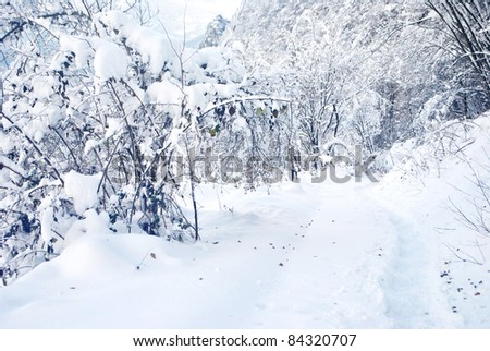 Frozen trees in the winter forest in Trentino, Italy