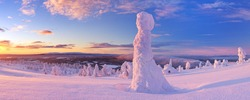 Frozen trees on top of the Levi Fell in Finnish Lapland