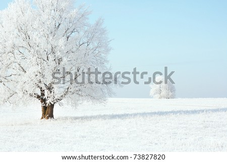 Frozen trees on winter field and blue sky