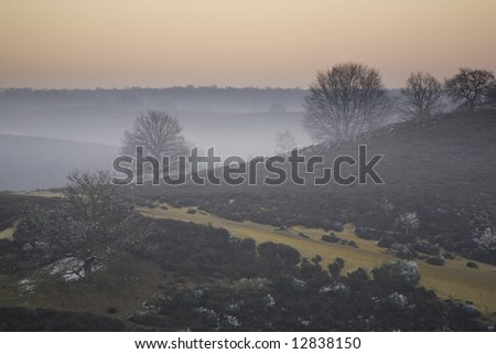 Frozen vegetation and some mist with trees in background