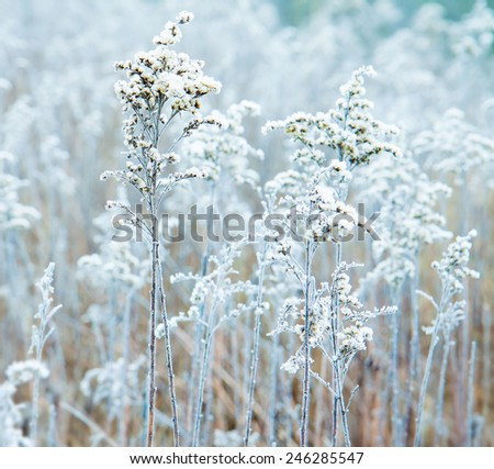 Frozen winter meadow close up. Cold weather, nature details.