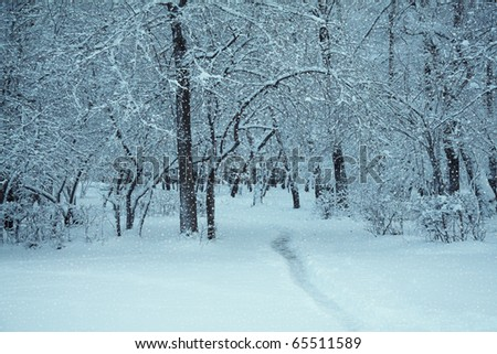 frozen woods covered with snow