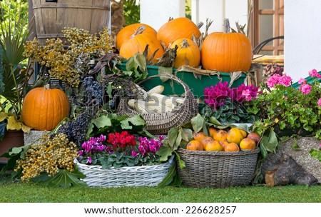 Fruit and Flower Arrangement in a Garden #226628257