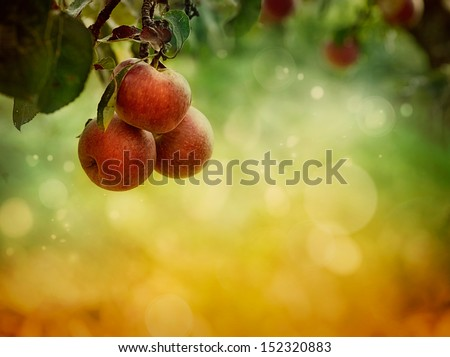 Fruit background. Apples in autumn bokeh background #152320883