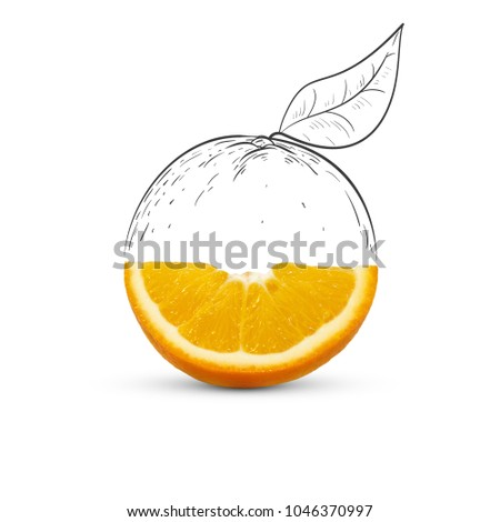 Fruit composition with fresh orange and cartoon cute doodle drawing half orange with leaf on white background. Creative minimalistic food concept.