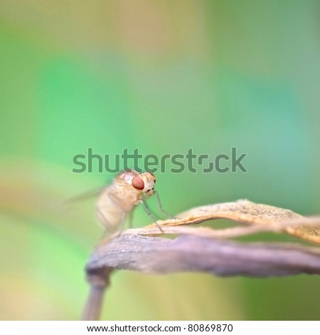 fruit fly on the green background