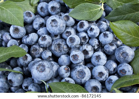 Fruit - Fresh blueberries in the basket