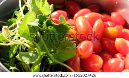 Fruit Fresh, Fresh Vegetables Plant, Ingredients Vegetable Cooking Concept.