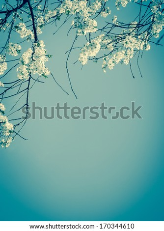 Fruit tree blossoms spring beginning Selective focus and shallow depth of field Aged photo Shadowed angles Retro style greeting card
