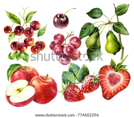 fruit watercolour painting vector