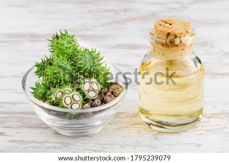 fruits and castor oil in bowl on the table, Ricinus communis Stock photo ©