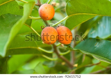 Fruits and fruit on the tree