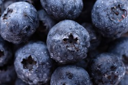 Fruits and vegetables: group of fresh wet blueberries, close-up shot