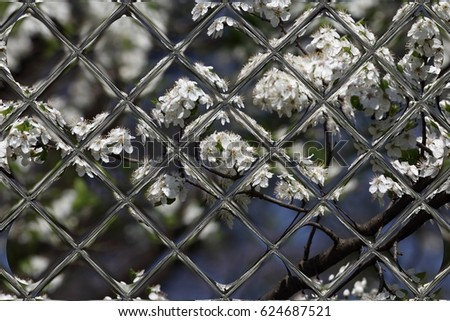 fruits blossom, spring through window panes