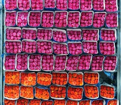 Fuchsia and orange roses packed and ready for export in the region of Tabacundo and Cayambe, north of Quito, Ecuador. The Rose is the national flower of Ecuador.