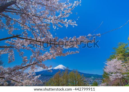 Fuji Mountain and cherry landscape.