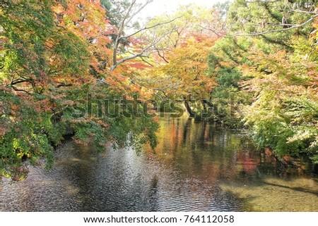 Fukuoka colorful autumn leaves are a time of beautiful colors and colorful foliage around the area, so many tourists come. #764112058