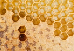 full and empty honeycomb close up