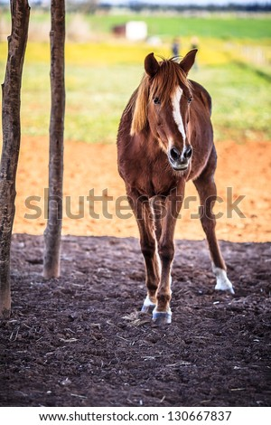 Full body picture of horse