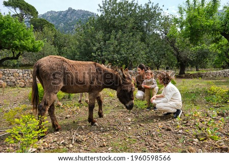 Full body young mother with kids wearing casual clothes hunkering down and feeding cute domestic donkey in verdant farmland Stockfoto ©