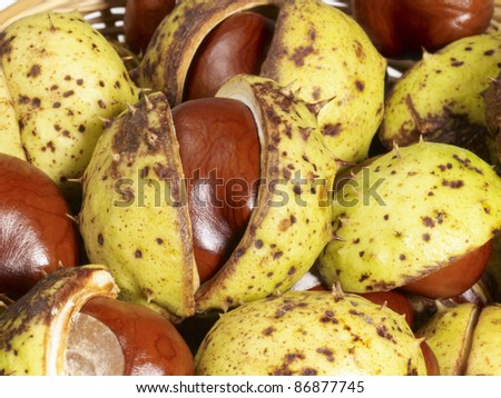 full frame background of some horse chestnuts