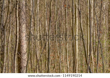 full frame background showing lots of twigs and stems #1149190214