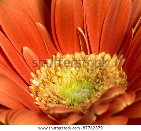 full frame closeup photography of a red gerbera flower