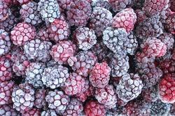 Full frame of frozen blackberries. Frosty fruit background