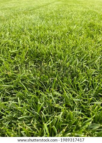 Full frame shot of grass Foto stock ©